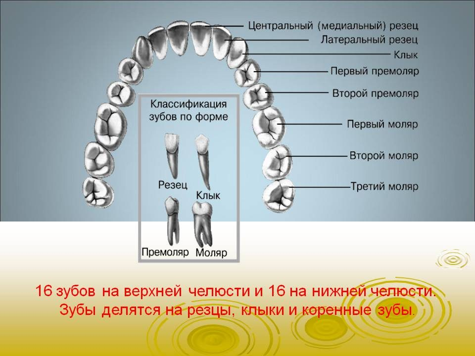 bajsakova_sofiya_05