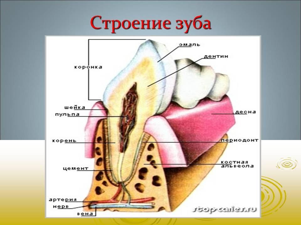 bajsakova_sofiya_06